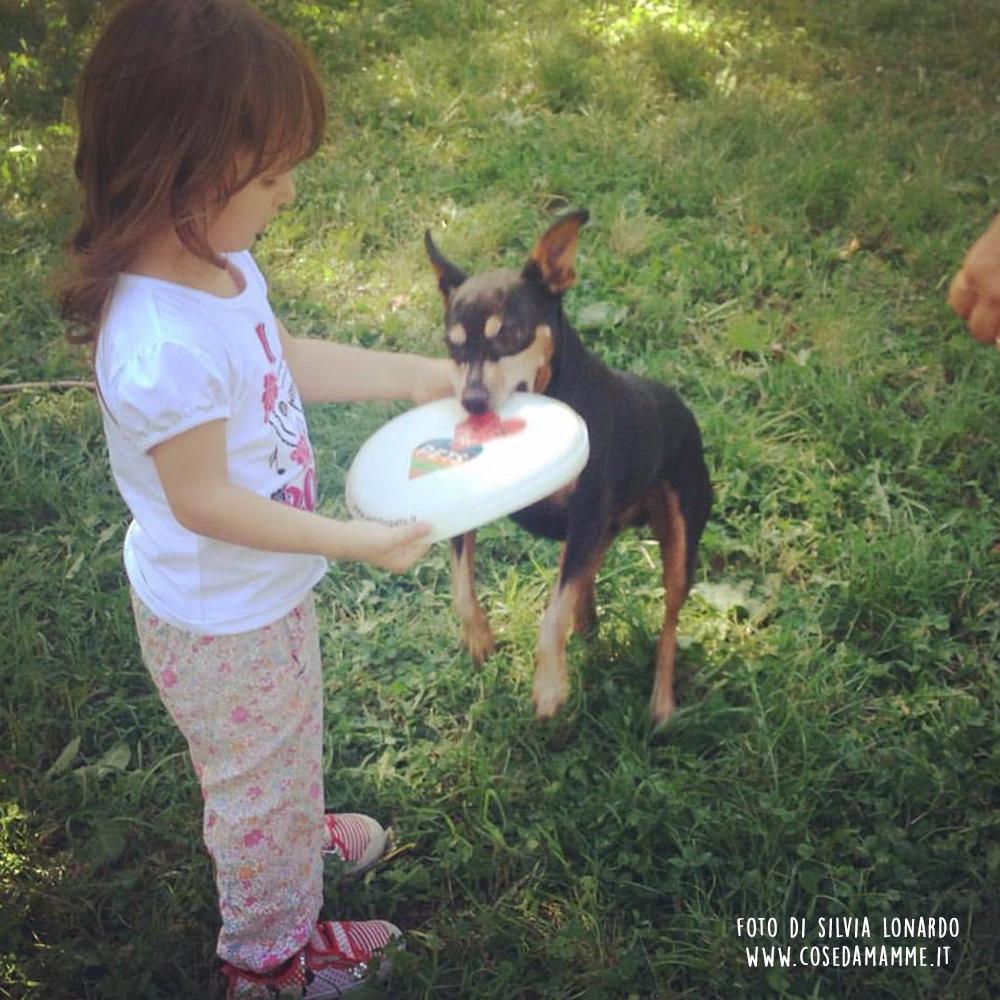cane gioca frisbee