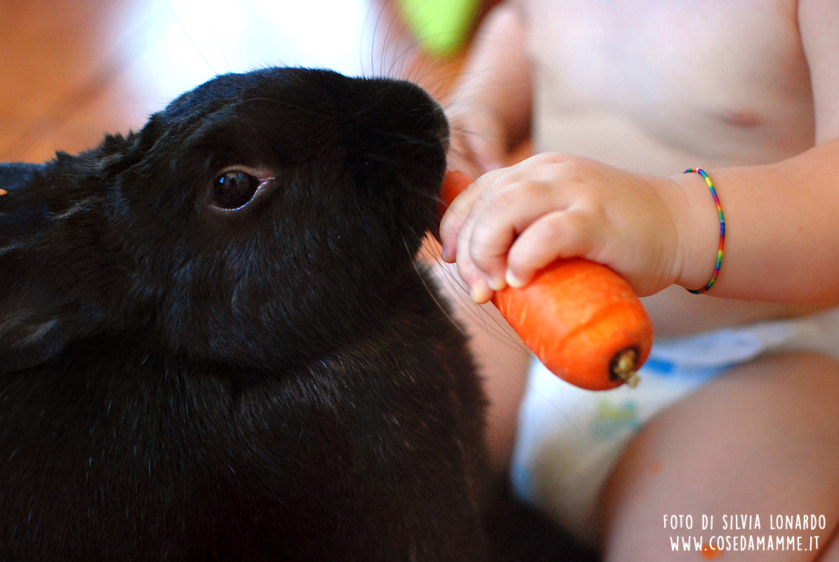 animale domestico foto da fare ai bambini