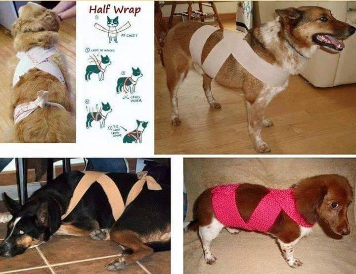 fascia calmante per cani