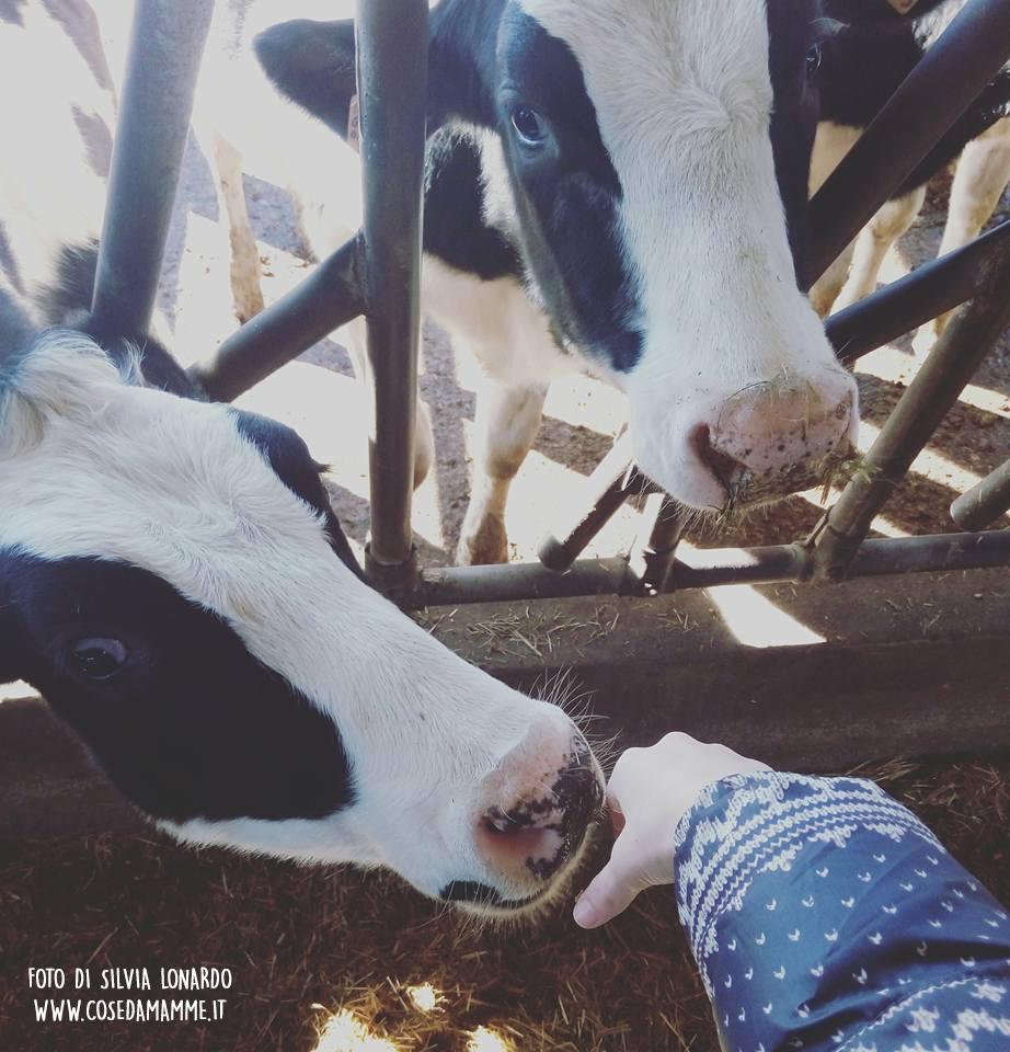mucche-mano
